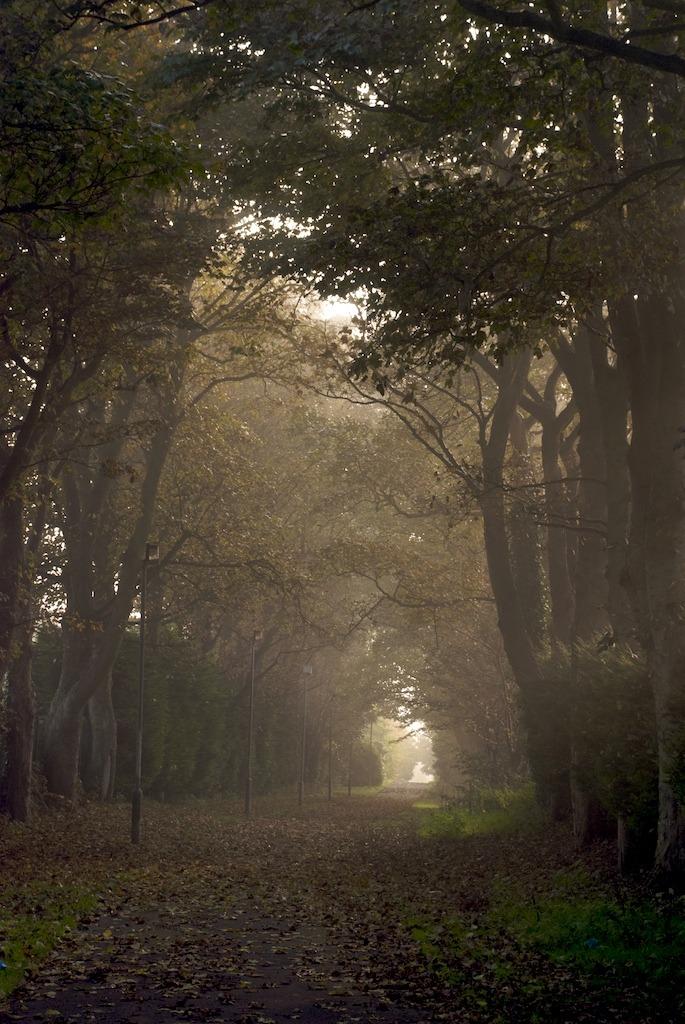 Foggy Lane beside the Foyle Bridge