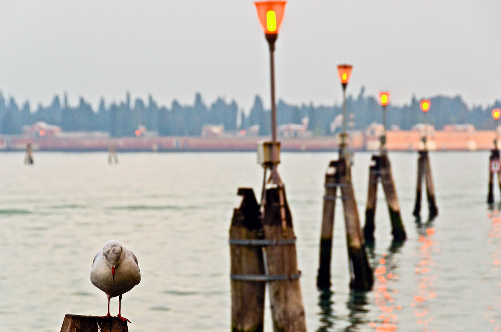 Bird and Lights, Venice