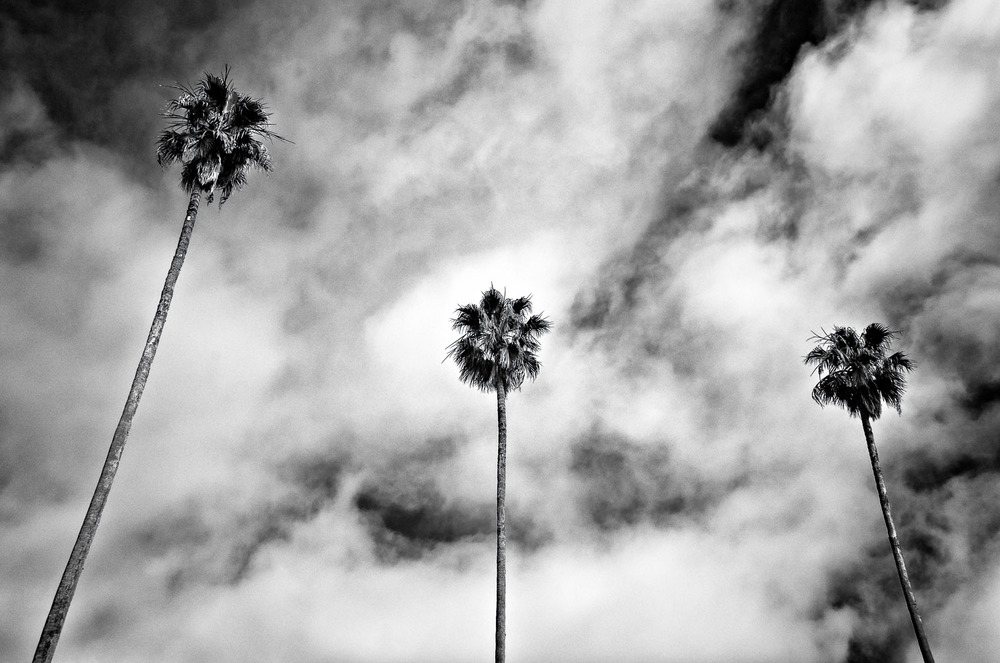 Larkspur Palms #6 | Mark Lindsay