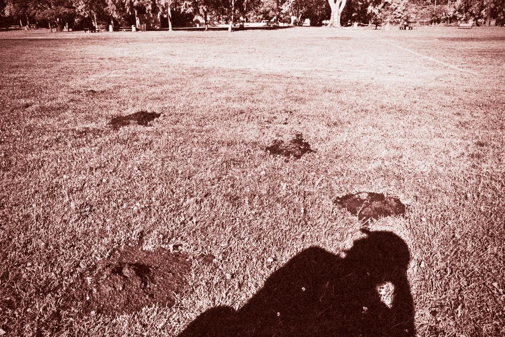 Park Eucalyptus III | Mark Lindsay