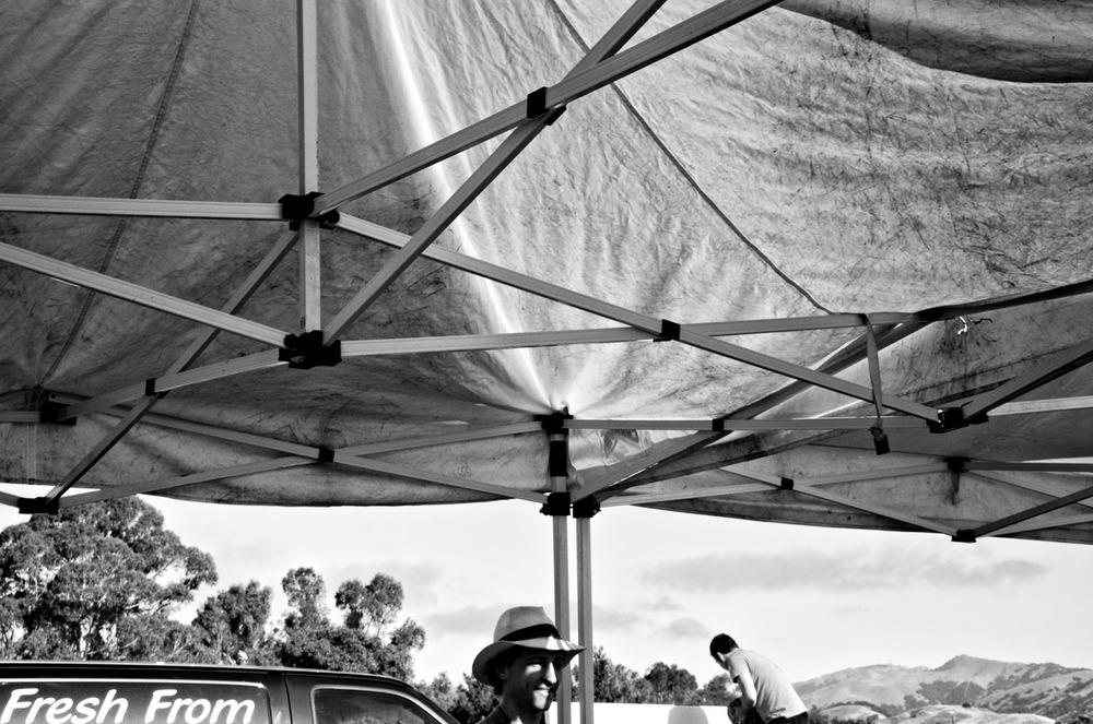Market Canopy | Mark Lindsay