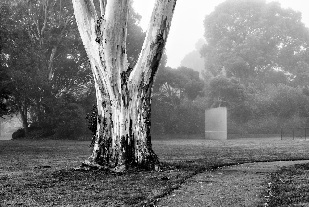 Eucalyptus in Fog | Mark Lindsay