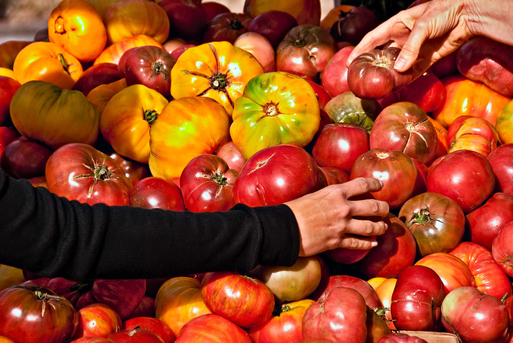 Tomato Hands | Mark Lindsay