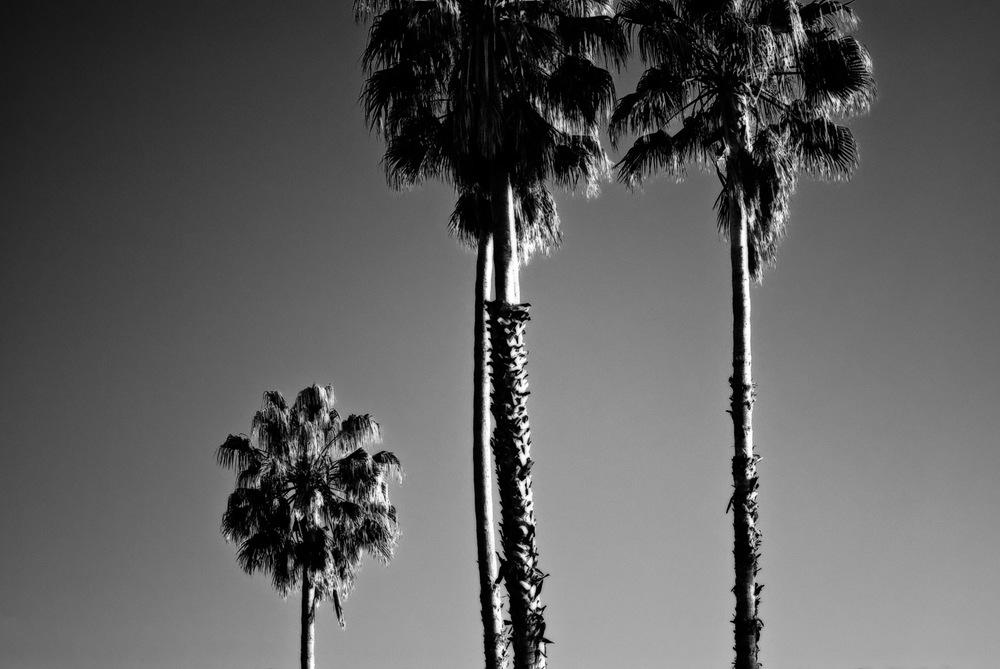 Three Palms in Suburbia | Mark Lindsay