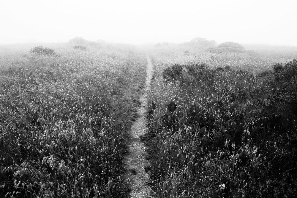 Fog and Trail | Mark Lindsay