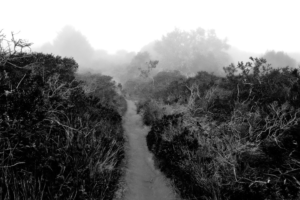 Path into Fog, Marin Headlands | Mark Lindsay