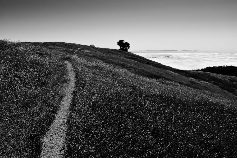 Trail, Tree, and Fog | Mark Lindsay