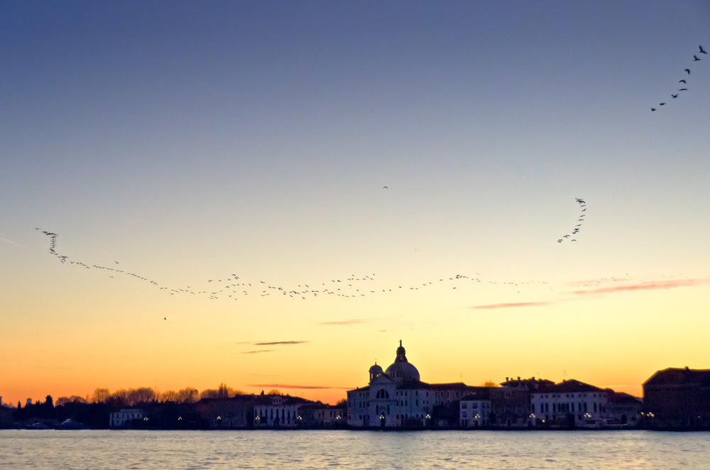 Birds before Sunrise, Giudecca Canal