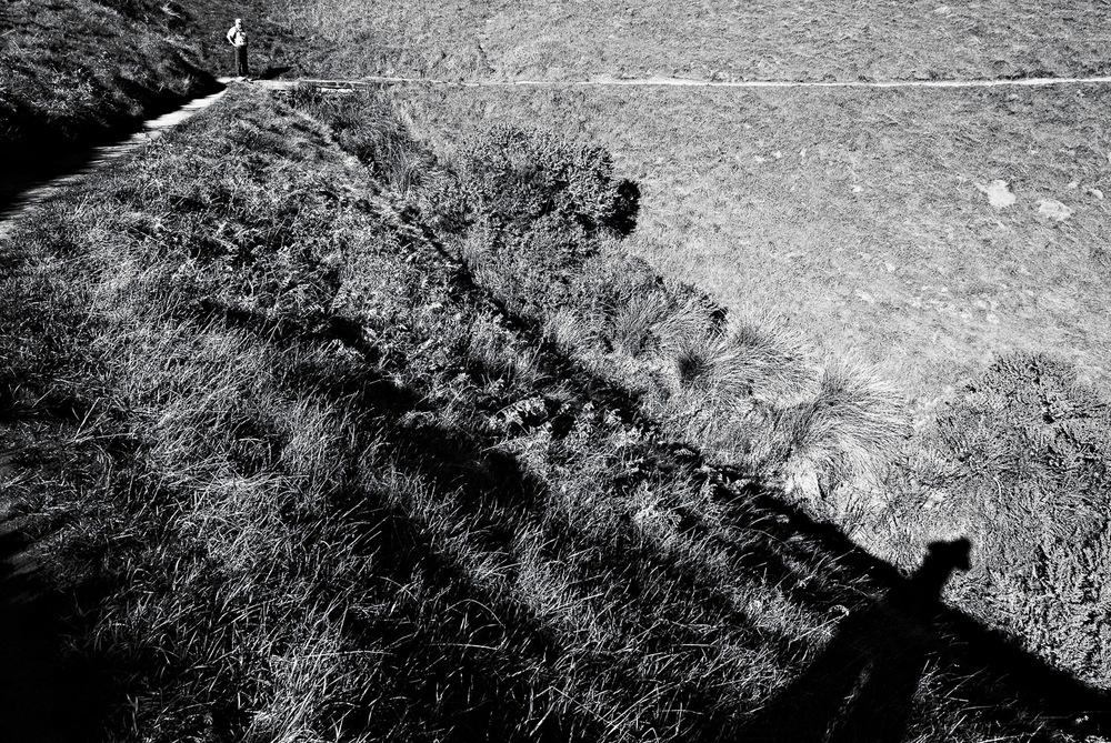Mt. Tamalpais Trail Shadows | Mark Lindsay