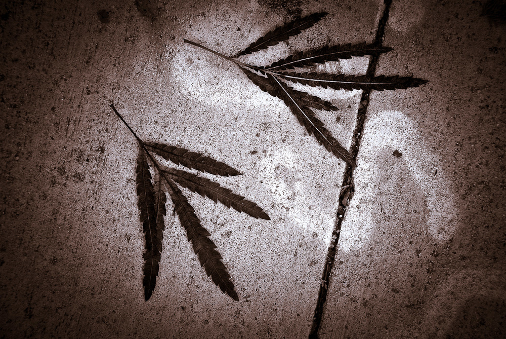 Still Life: Leaves on Concrete | Mark Lindsay
