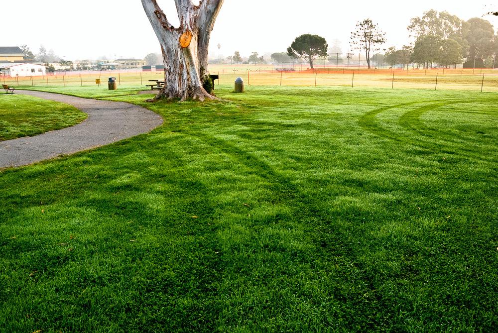 Park Eucalyptus, II | Mark Lindsay