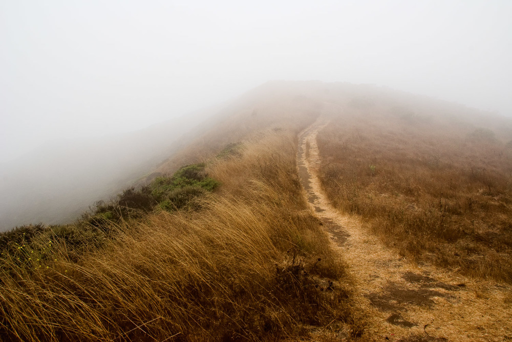 Fog at Coastal Trail, Marin County | Mark Lindsay