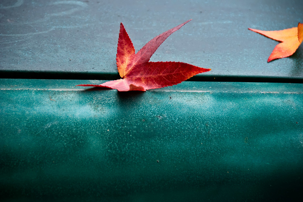 Singular Leaf | Mark Lindsay