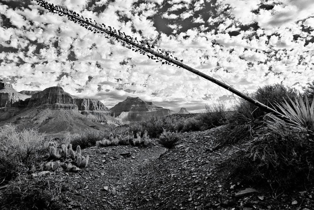 Tonto Trail | Mark Lindsay