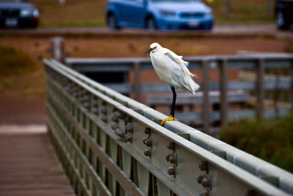 Bird on Bridge | Mark Lindsay