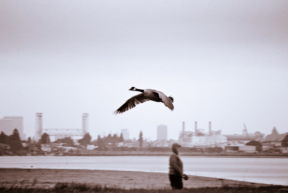Foreboding Goose | Mark Lindsay