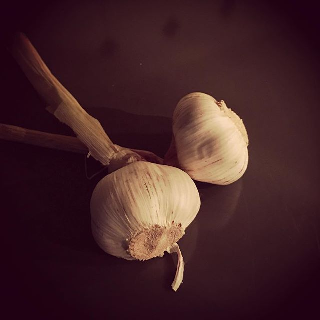 Garlic in a pre-dawn kitchen