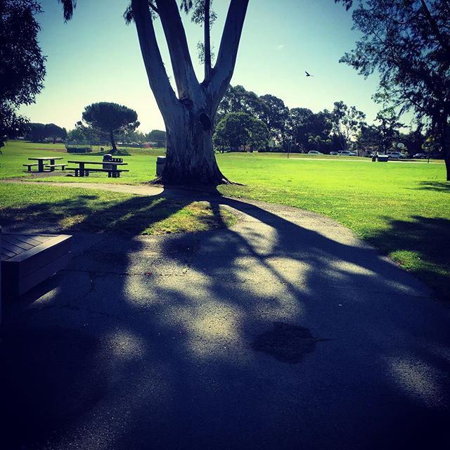 Town Park Tree