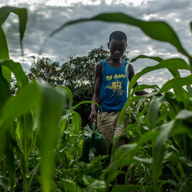 Momede Marcelino (18) waters his mother's garden in northern Mozambique. His mother, Cecilia, has been learning conservation agriculture techniques from @careorg including minimum tillage, mulching and intercropping -- which has greatly increased her production yields of cabbage, onions, tomatoes, peppers, corn and lettuce.  #Mozambique #Africa #nutrition #agriculture