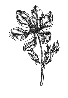 contact_flowers-02.png