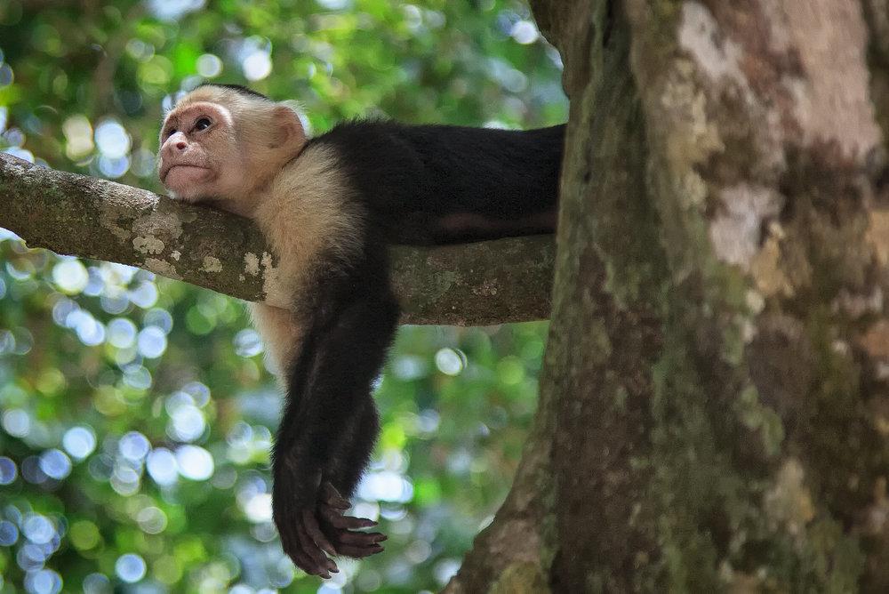Costa Rica-0226.jpg