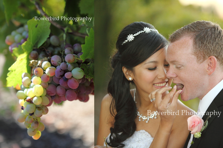 The bride feeding her groom some juicy grapes fresh from the vine. Tooo cute! © Bowerbird Photography 2012; Wedding Photography at Fogarty Vineyards, Woodside.