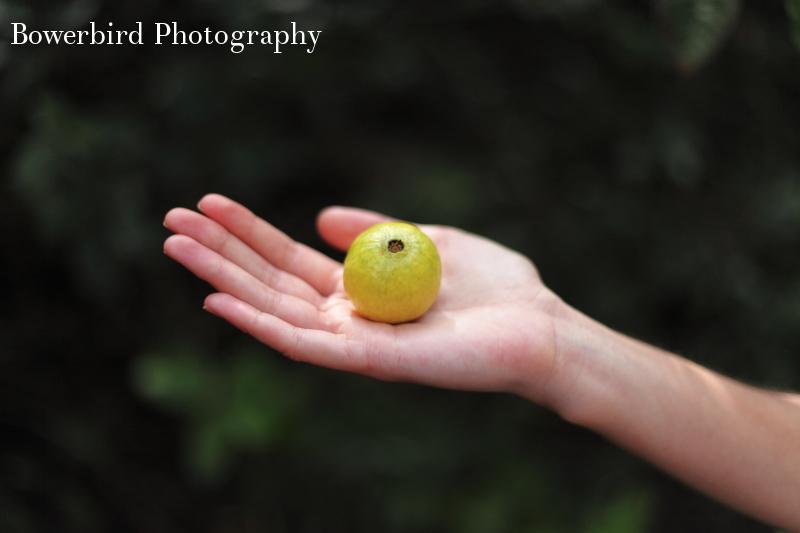 Wild guava.
