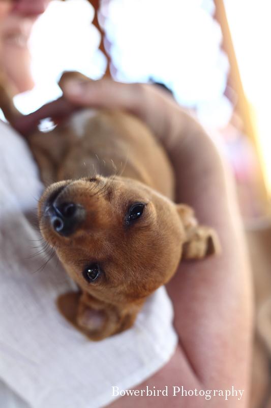 Too cute!© Bowerbird Photography 2012; Travel Photography Kauai, Hawaii.
