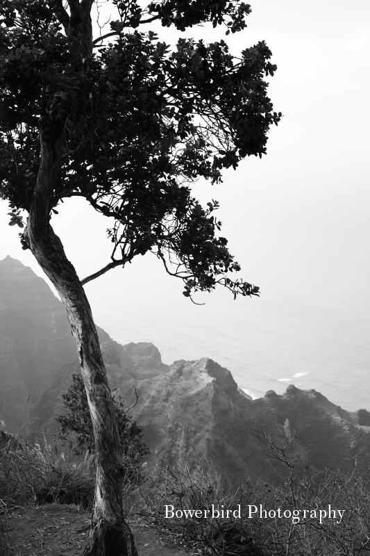 Hiking from the canyon to the Napali Coast. © Bowerbird Photography 2012; Travel Photography Kauai, Hawaii.
