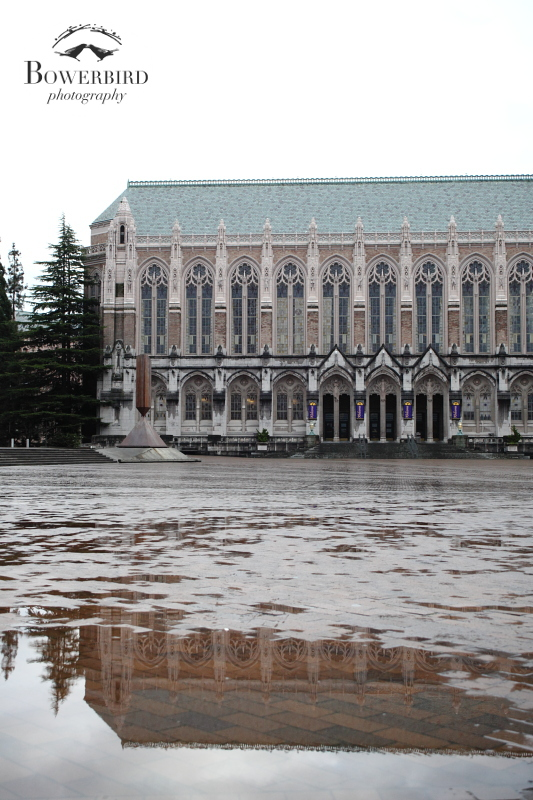 A trip down memory lane, walking around UW campus in the rain. © Bowerbird Photography 2013; Travel Photography, Seattle.