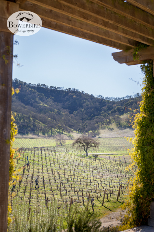 The vineyard. © Bowerbird Photography 2013, Clos LaChance Winery in San Martin, Wedding Site Visit.