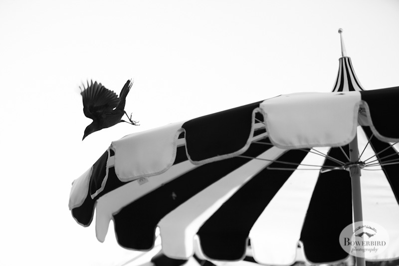 Birds in Austin. © Bowerbird Photography, 2013.