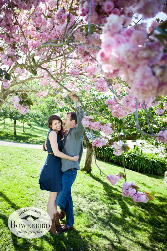 Cherry blossoms! © Bowerbird Photography 2013; Alamo Square, San Francisco Engagement Photo.