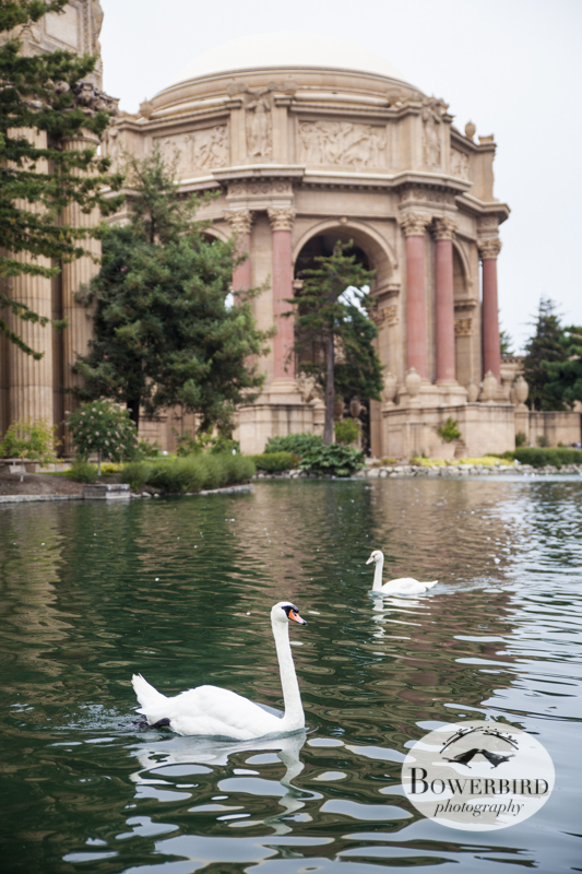 San Francisco Engagement Photos at Palace of Fine Arts. © Bowerbird Photography 2013.