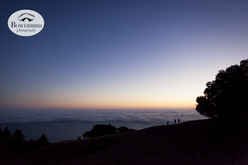 Secret concert on Mt. Tam. © Bowerbird Photography, 2013.