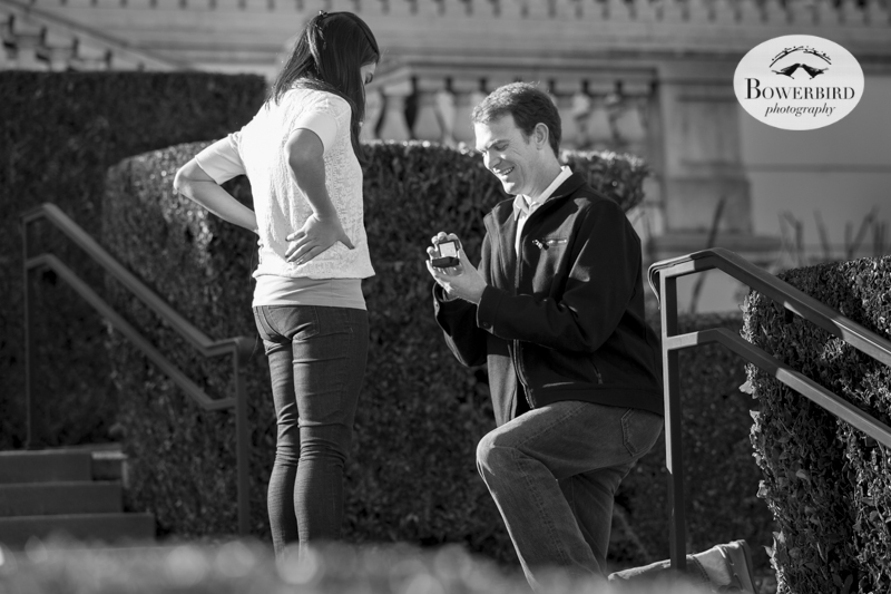 Surprise Proposal in Napa Valley at Domaine Carneros. © Bowerbird Photography, 2014.
