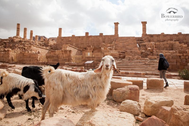 Petra, Jordan. © Bowerbird Photography, 2014