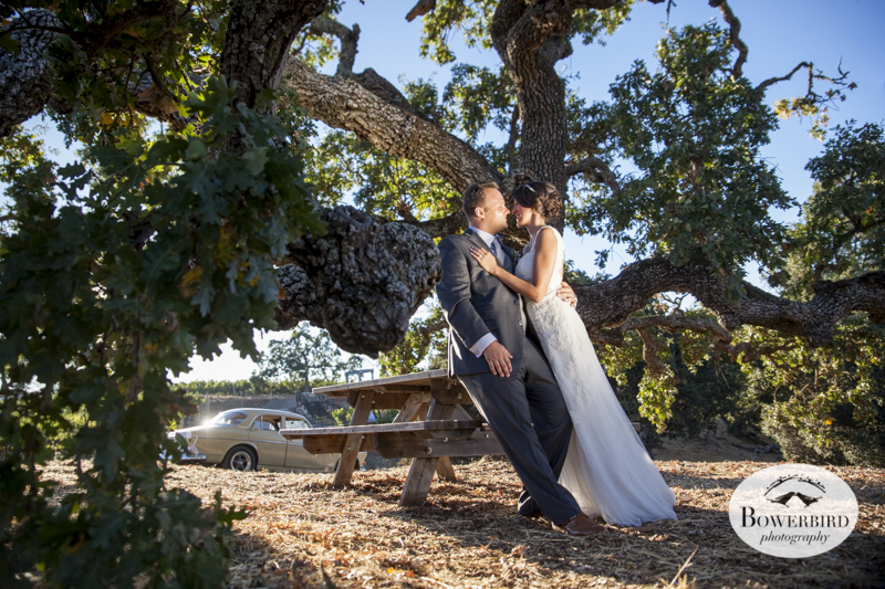 After the wedding ceremony, the couple spends some time together under a gorgeous oak tree. Meritage Resort and Spa wedding. © Bowerbird Photography 2014