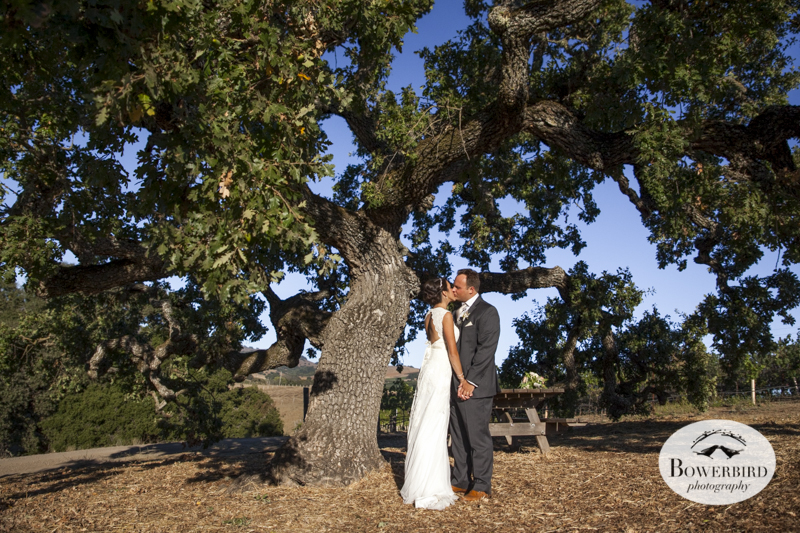 Kissing under the oak tree after their wedding ceremony on the Meritage vineyard in Napa Valley. © Bowerbird Photography 2014