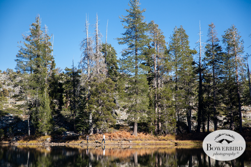 Tahoe National Forest. © Bowerbird Photography 2014