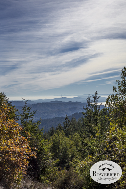 Mt. Tamalpais. © Bowerbird Photography 2014