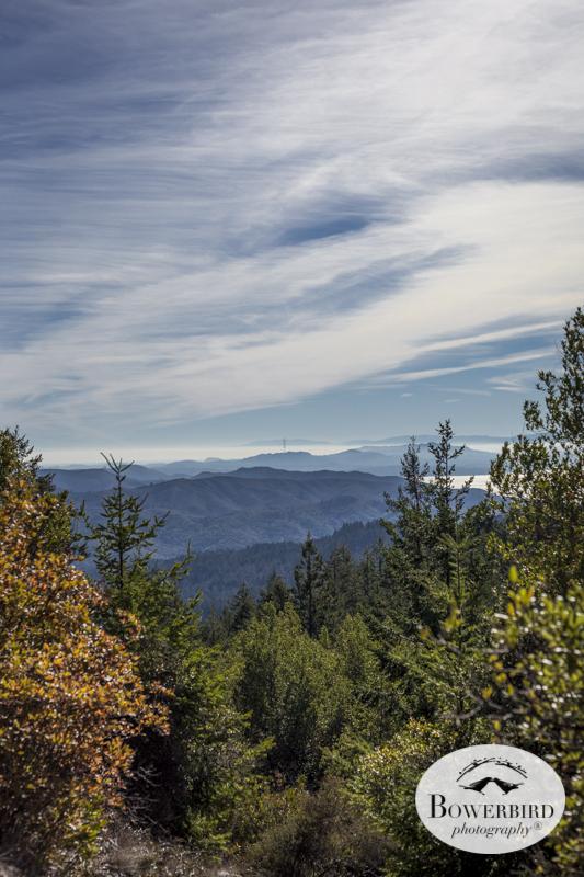 Mt. Tamalpais. © Bowerbird Photography 2014