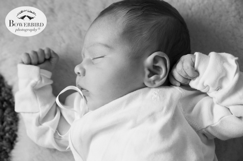 San Francisco Newborn Photography Session.© Bowerbird Photography 2015