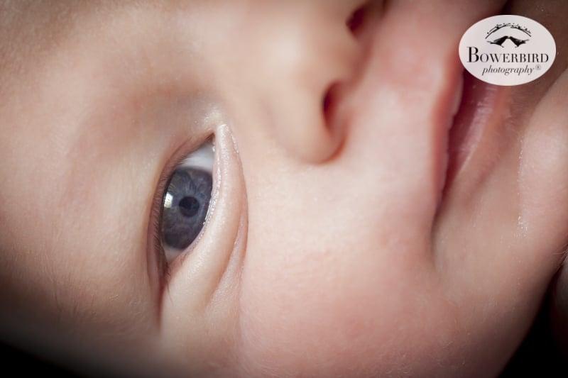 San Francisco Newborn Photography. Amazing blue eyes! © Bowerbird Photography 2016