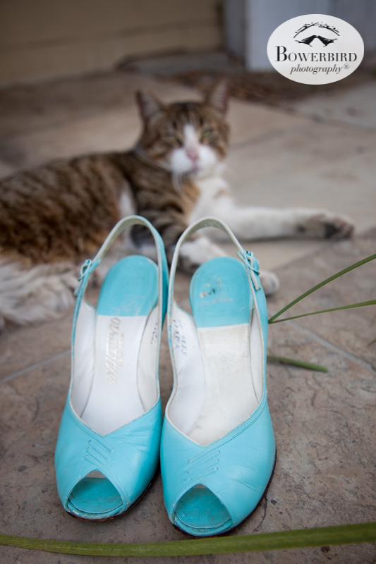 Los Angeles Destination Wedding Photography. The bride's vintage teal wedding heels and the neighborhood cat. © Bowerbird Photography 2016