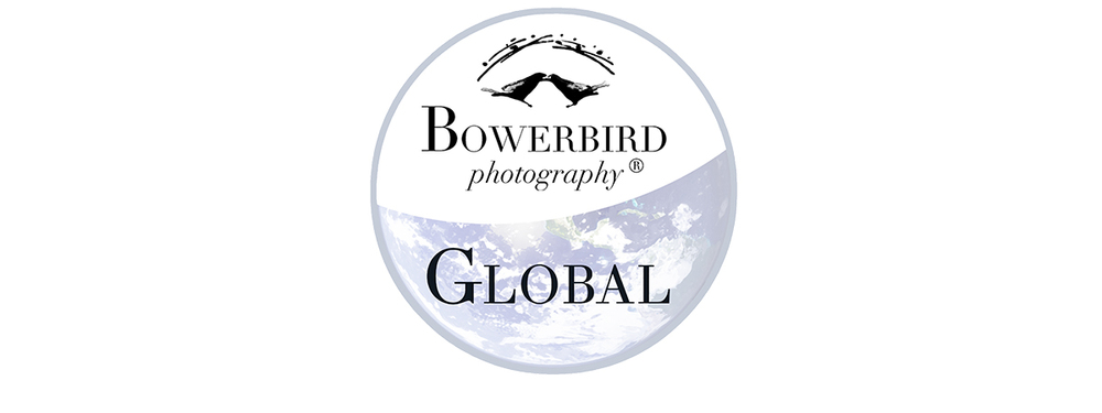 Bowerbird Global.