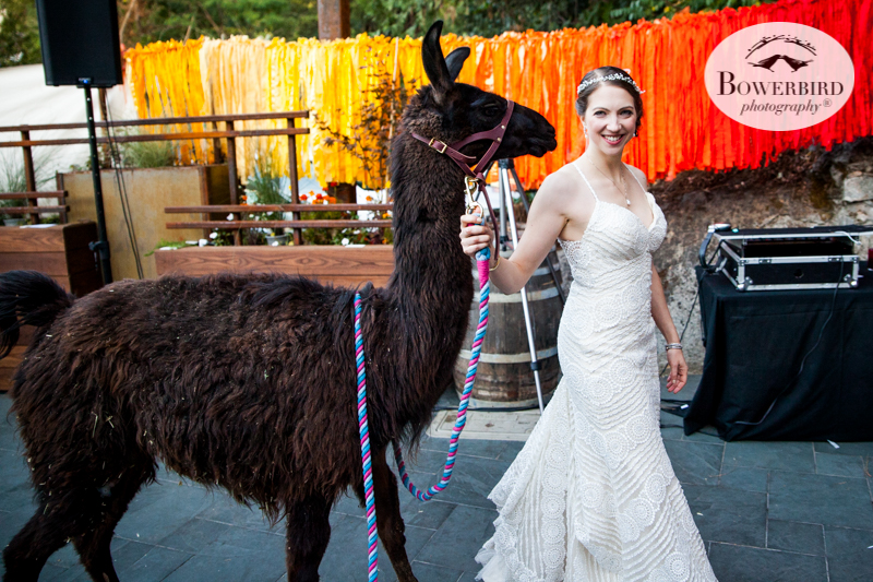 0566The Stone House Nevada City Wedding Photographer © Bowerbird Photography 2017.jpg