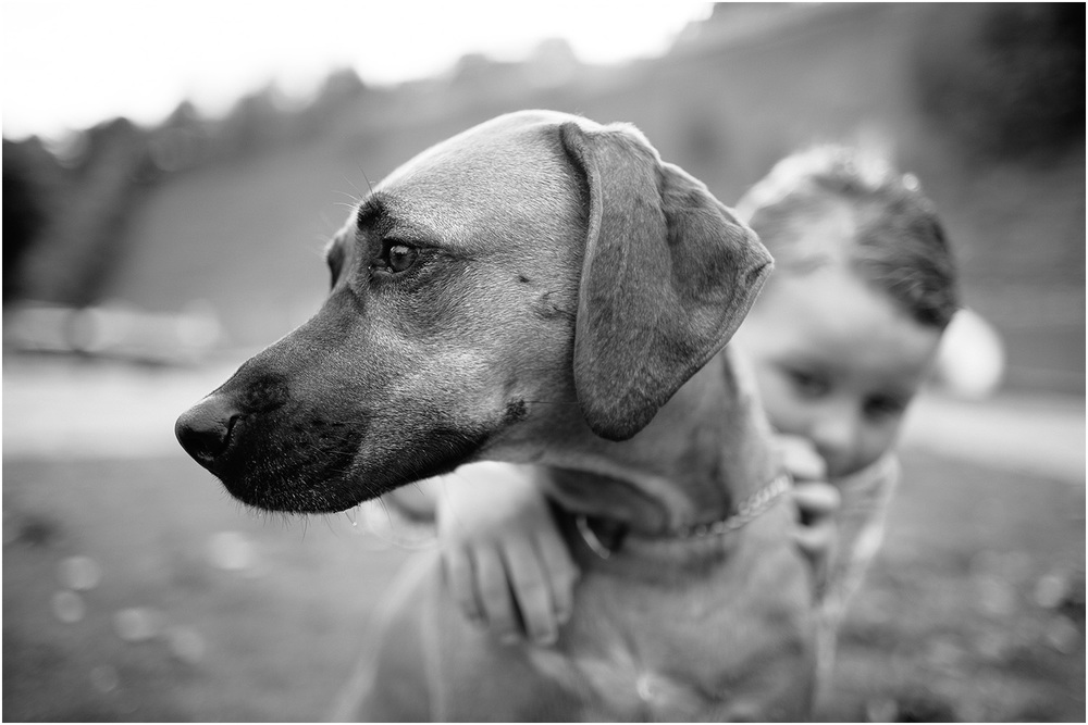 Such a cool looking dog - Family Portraits in Cleveland at Rocky River Park