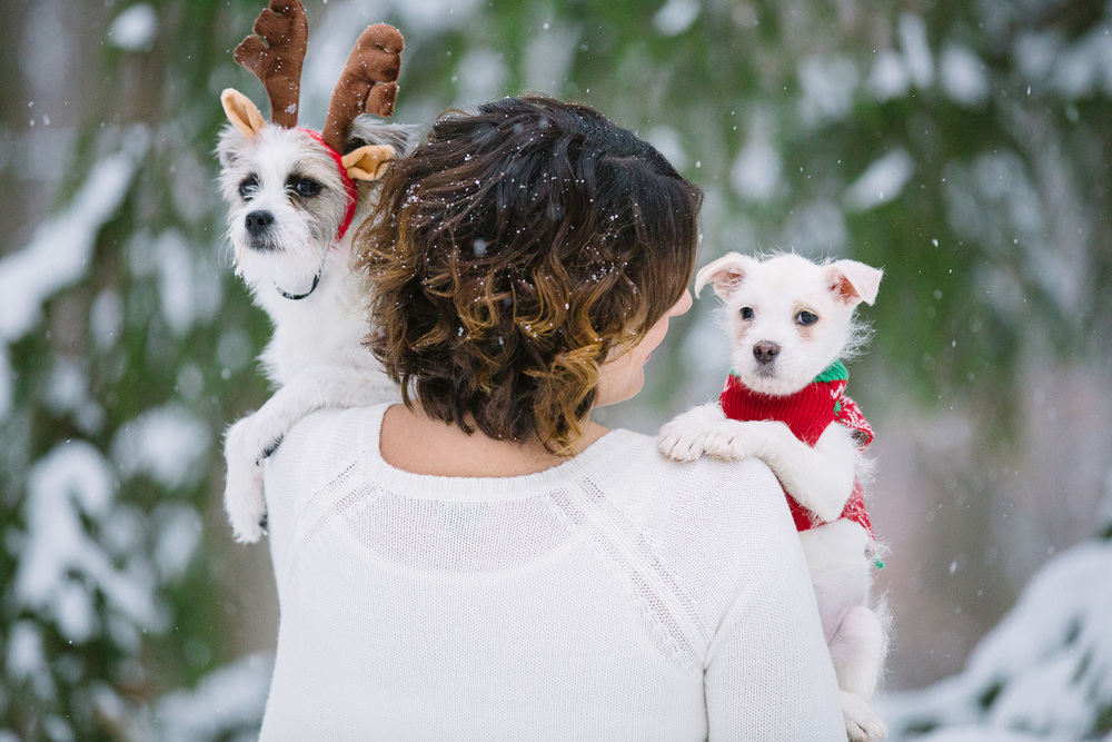 Dog and Puppy Photographer in Cleveland 03.jpg