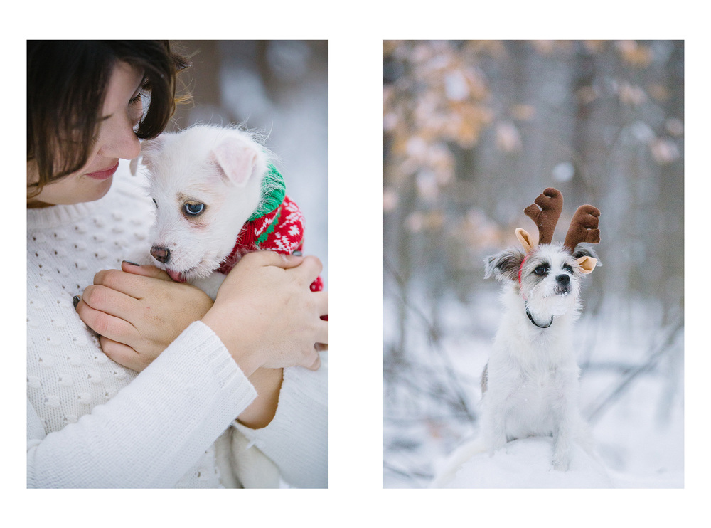 Dog and Puppy Photographer in Cleveland 04.jpg